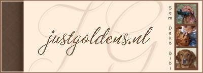 Golden retriever kennel van werklijn honden